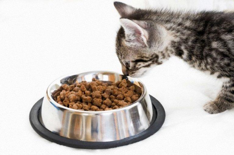Корм для котят — один из вариантов полноценного питания для беременной или кормящей кошки