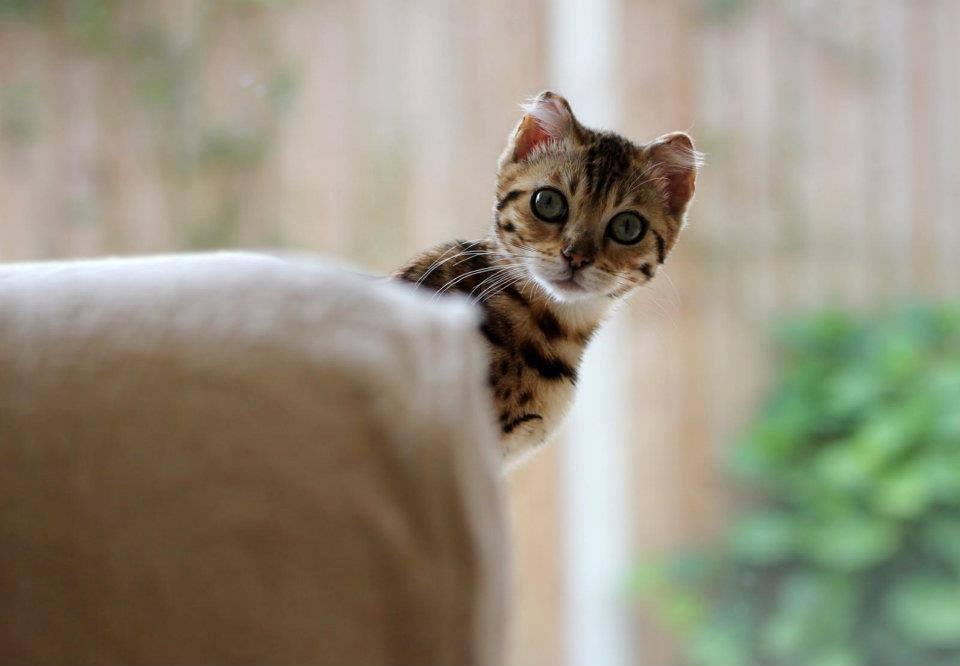 Котам, как правило, ревность свойственна больше, чем собакам