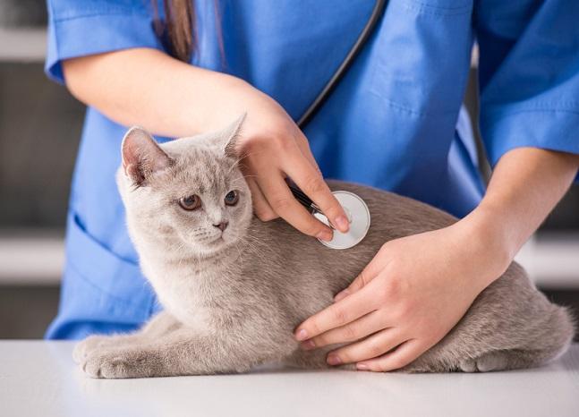 Кота сразу показывают ветеринару