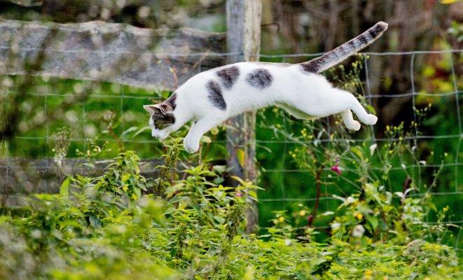 Коты очень изобретательны в плане поисков лазеек