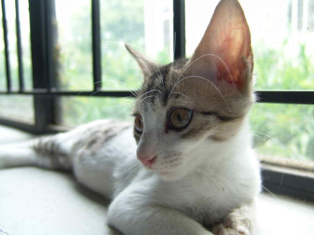 Коты по большей части предпочитают одиночный образ жизни