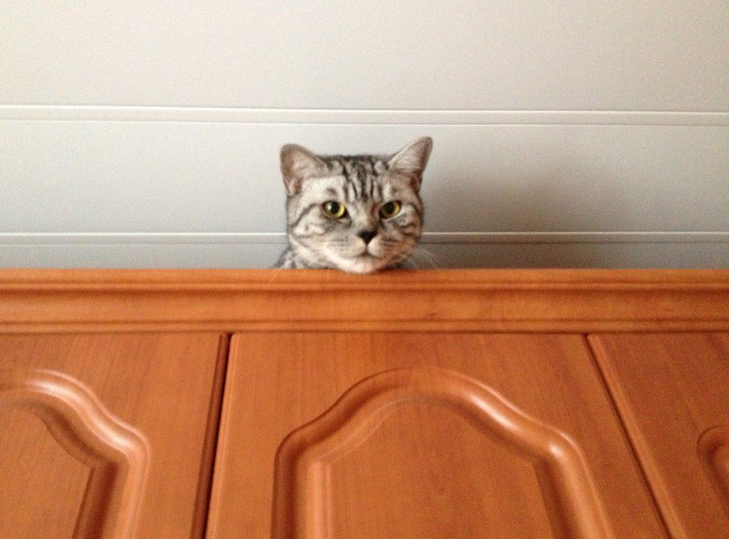 Коты - целеустремленные создания, побудить их отказаться от нежелательных потребностей будет не так просто