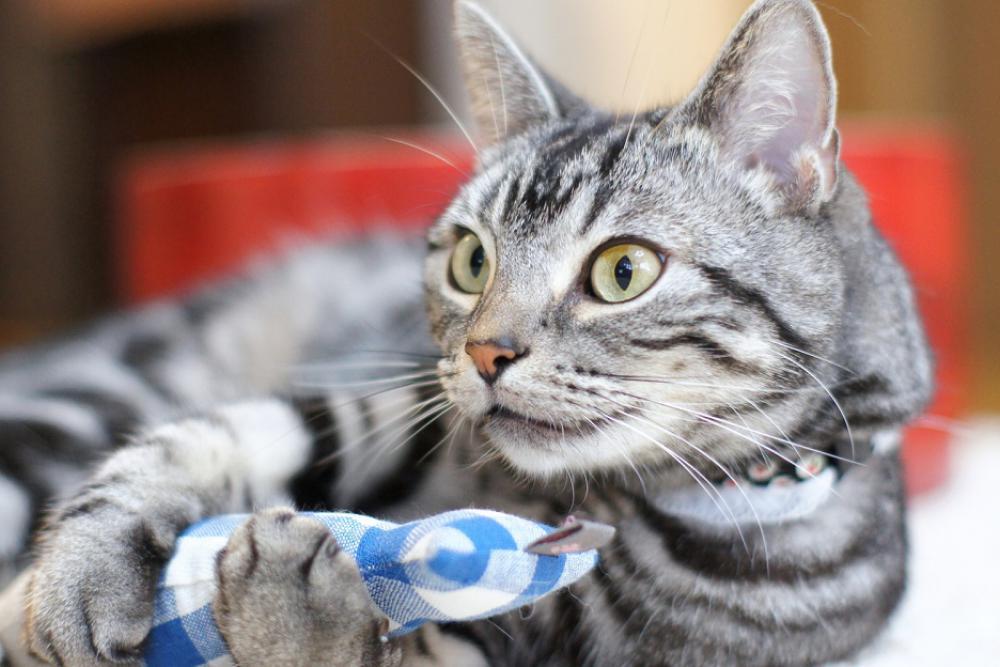 Коты эмоционально вовлекаются в происходящие в доме события