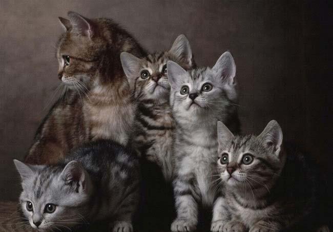 Котята тоже славятся крепким здоровьем