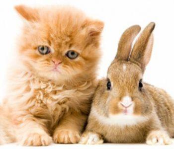Котёнок и крольчонок