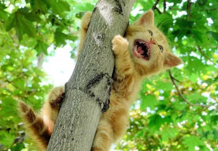 Котёнок просит о помощи