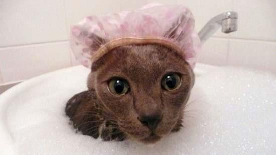 Кот в шапочке для купания