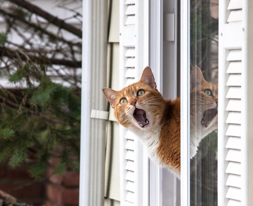 Кот зовет кошку