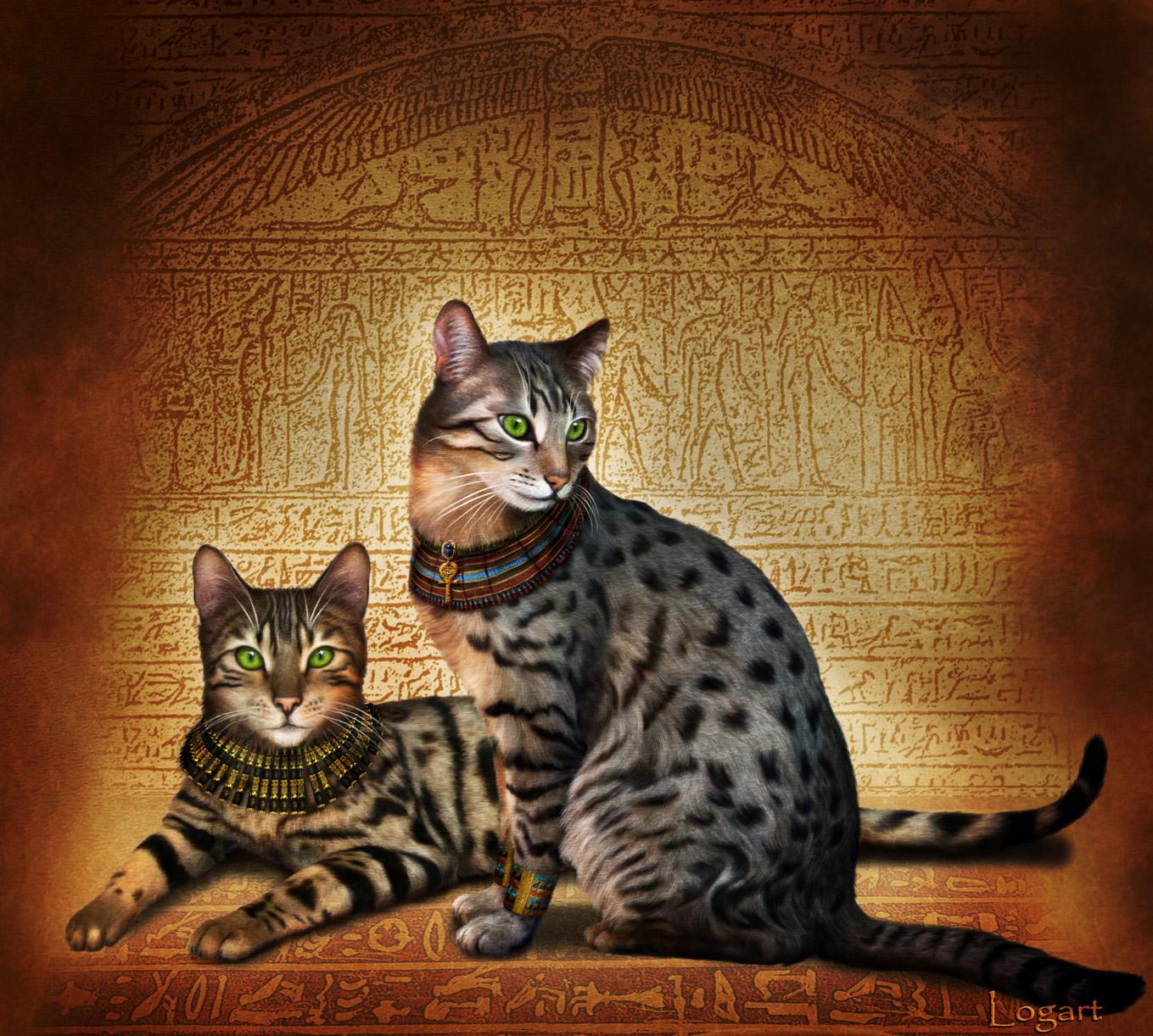 Кот и кошка египетской мау