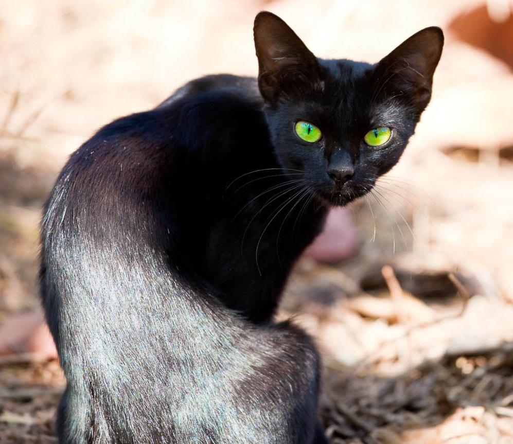 Кот с недостатком массы тела