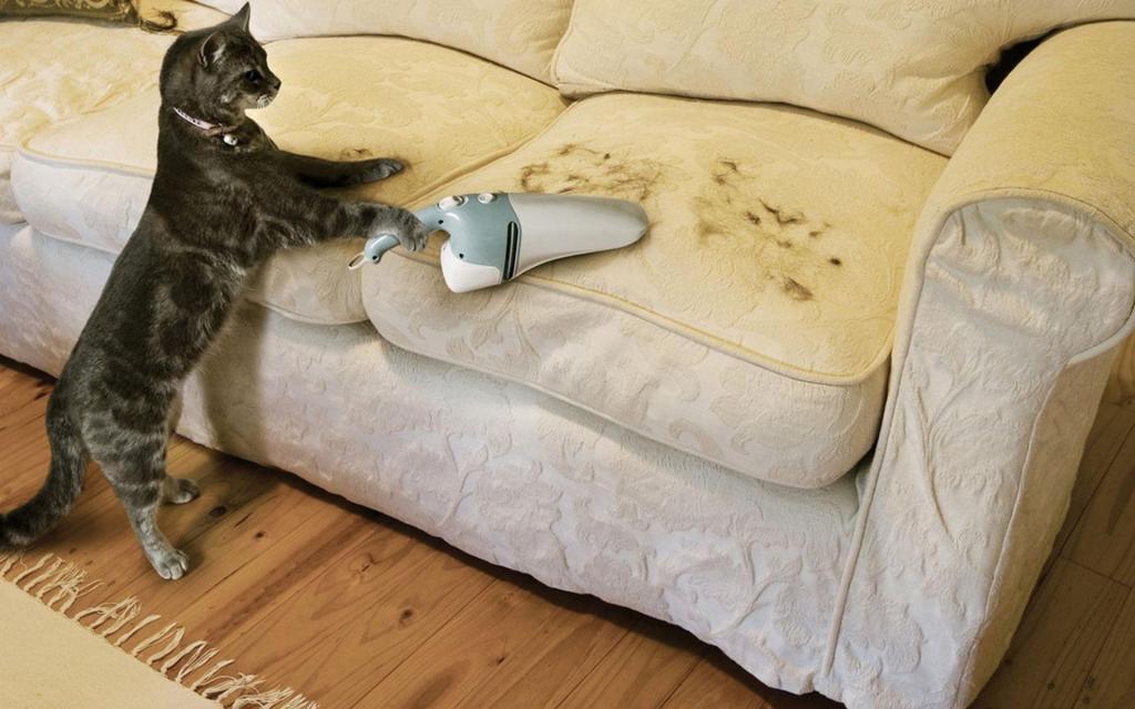 Кот, убирающий за собой - мечта любого хозяина