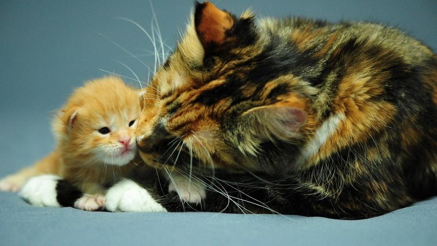 Кошачья материнская любовь