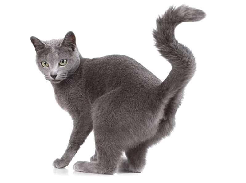 Кошка в состоянии охоты