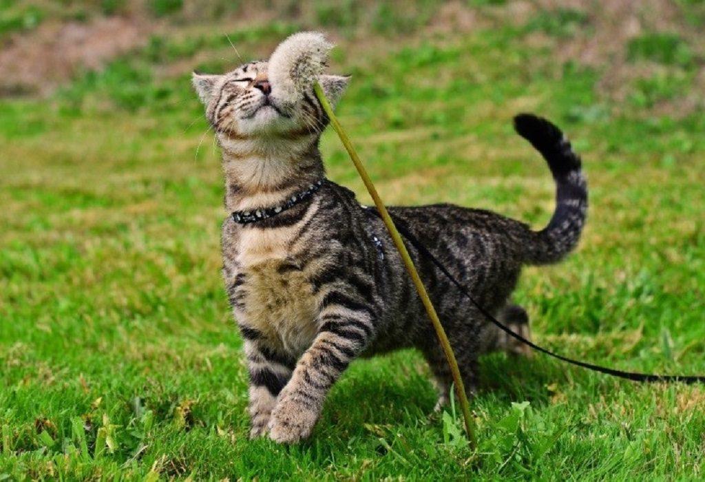 Кошка наслаждается природой