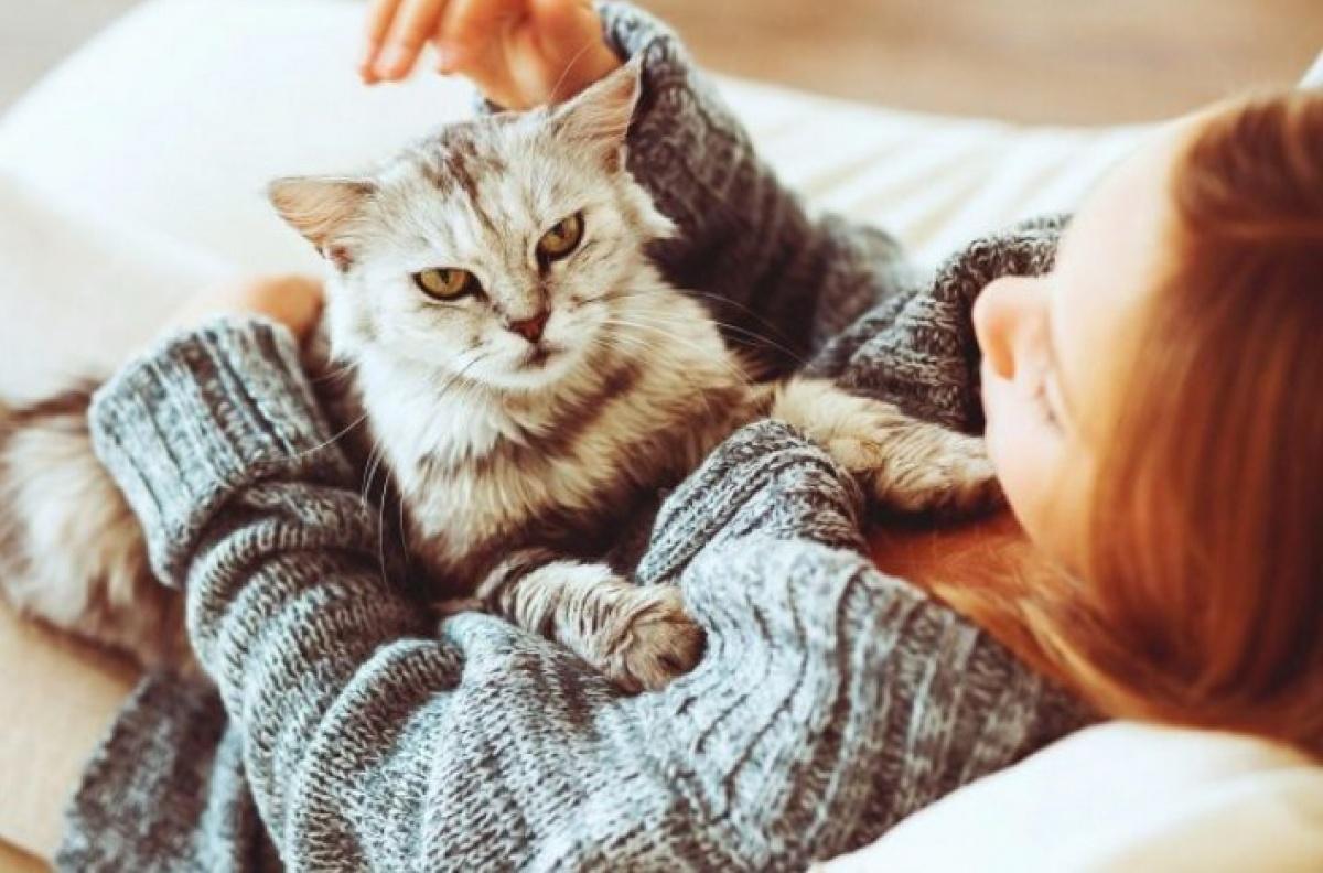 Кошке нужна ласка и забота хозяев в «особые» дни