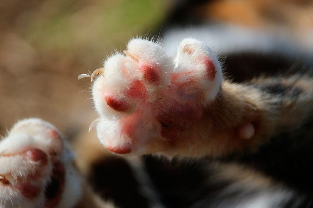 Кошки достают свои когти лишь в случае необходимости