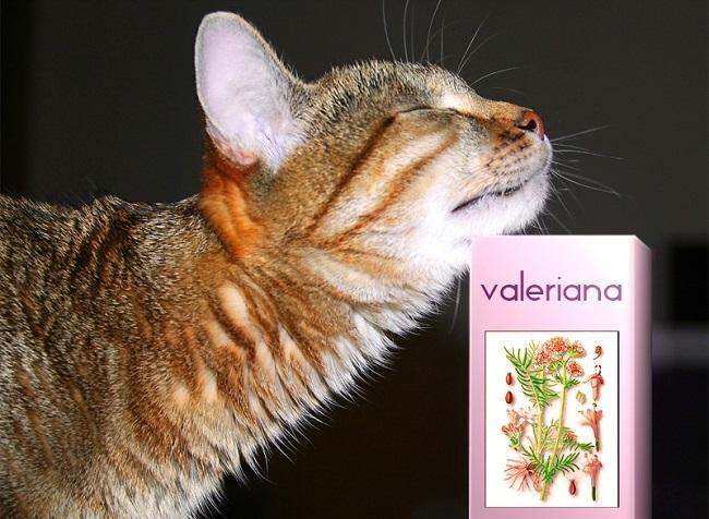 Кошки любят запах валерьянки