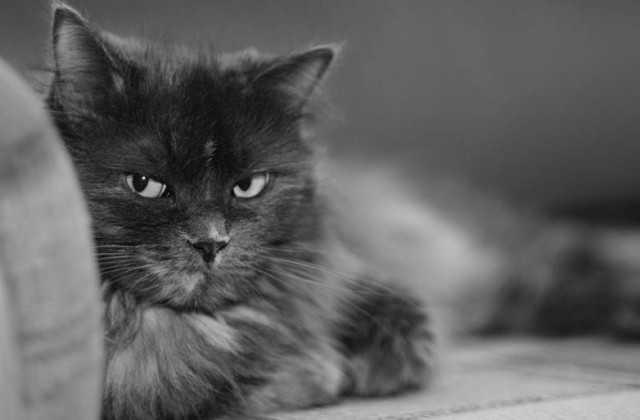 Кошки могут долго помнить обиду и при случаи мстить хозяину