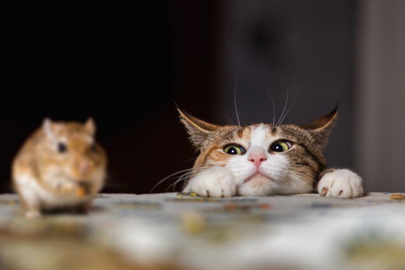 Кошки спасали зернохранилища от мышей