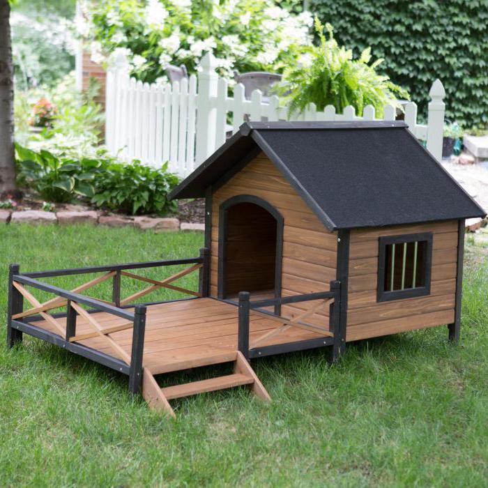 Красивый и оригинальный домик для собаки, который стоит на ножках и не будет затоплен в сезон сильных дождей