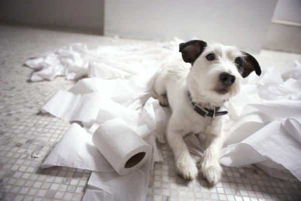 Кровь в испражнениях собаки - повод для детального обследования