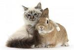 Кролик и кошка взрослые
