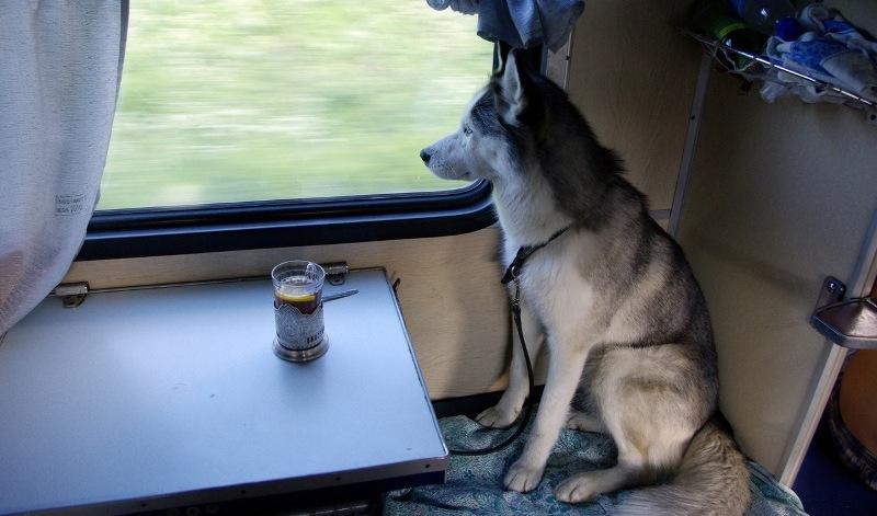 Крупные собаки могут путешествовать лишь в выкупленных купе