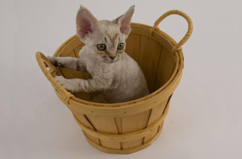 Купание котёнка