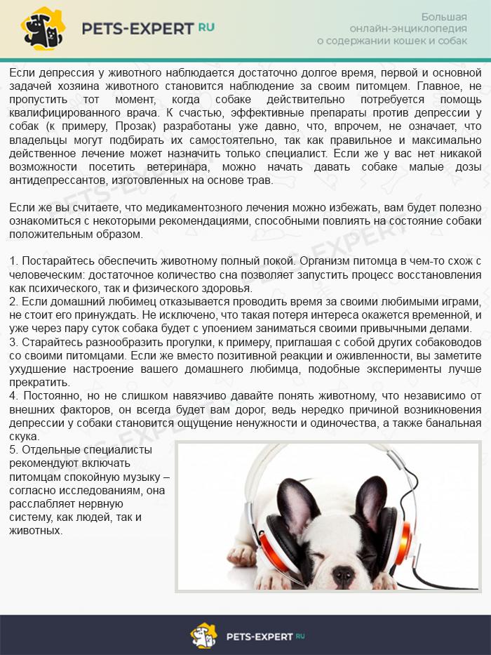 Лечение и профилактика депрессии у собак