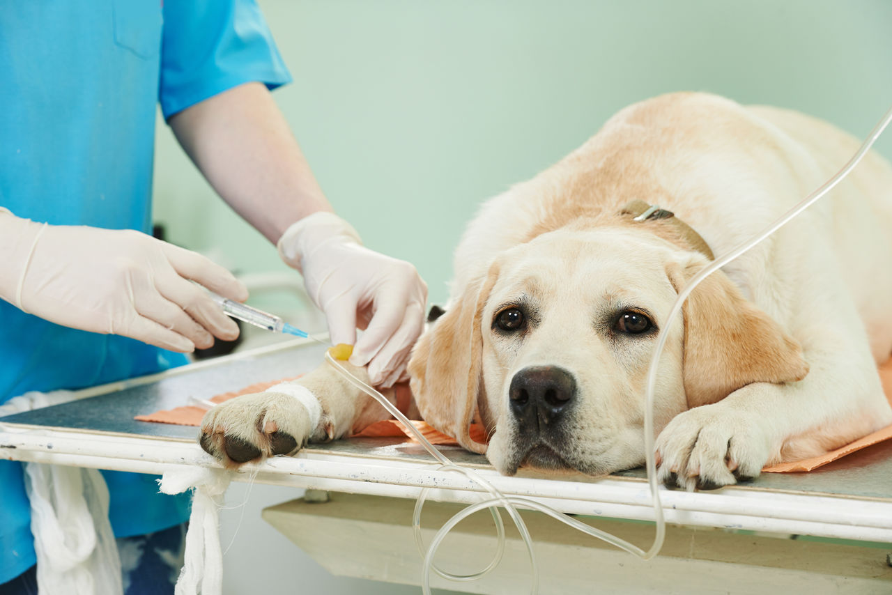 Лечить собаку лучше в условиях стационара