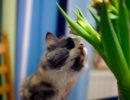 Любознательная кошка