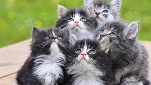 Маленькие пушистые питомцы. Как определить возраст котёнка?