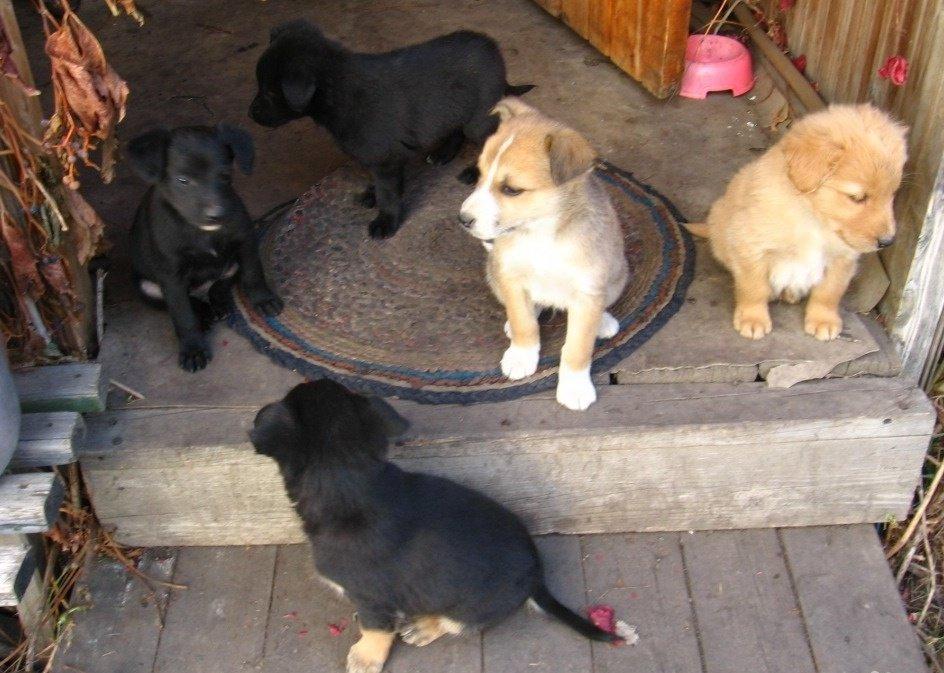 Маленькие щенки очаровательны: выбор за вами