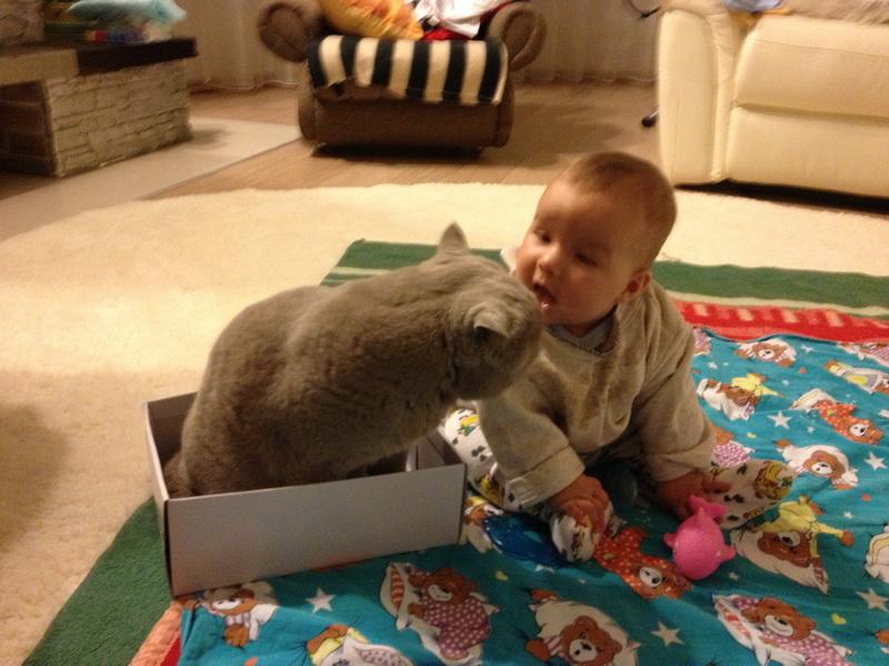 """Малыши - лучшие """"тренеры"""" толстых котов"""