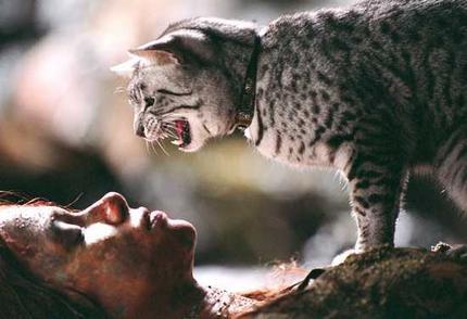 Мау - кошки потустороннего мира