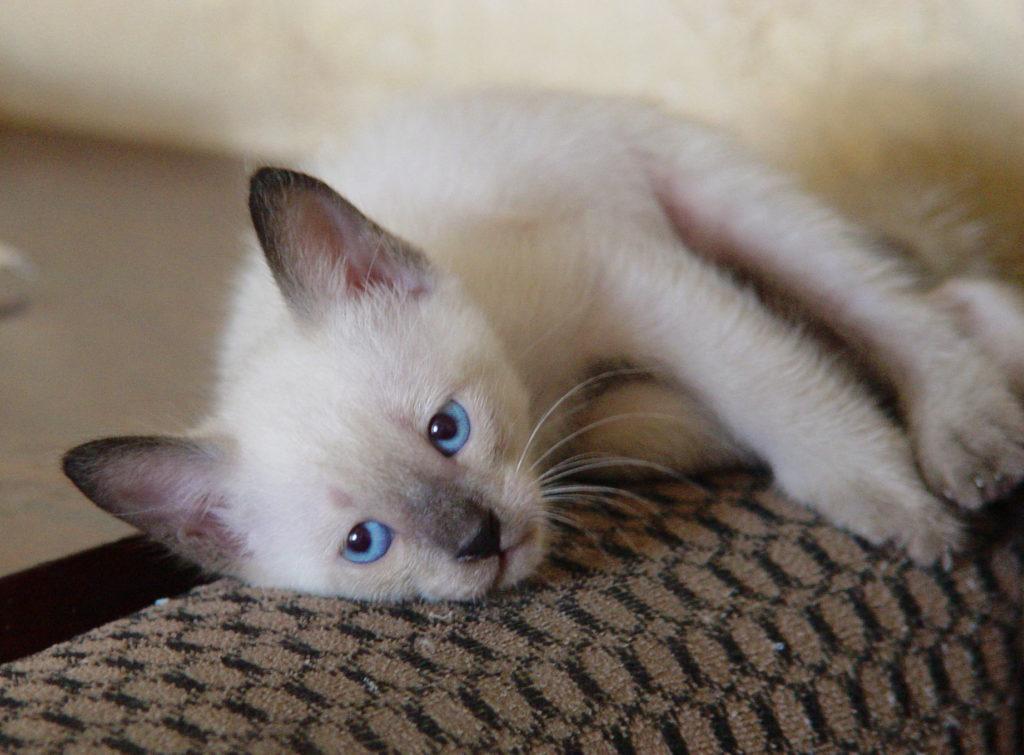 Место для сна и отдыха должно полностью отвечать потребностям котенка