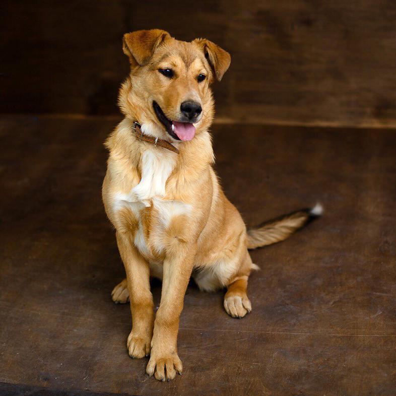 порода собак дворняжка фото взрослые