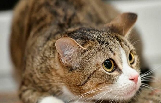 Многие коты теряют аппетит, если сталкиваются с яркими отрицательными переживаниями