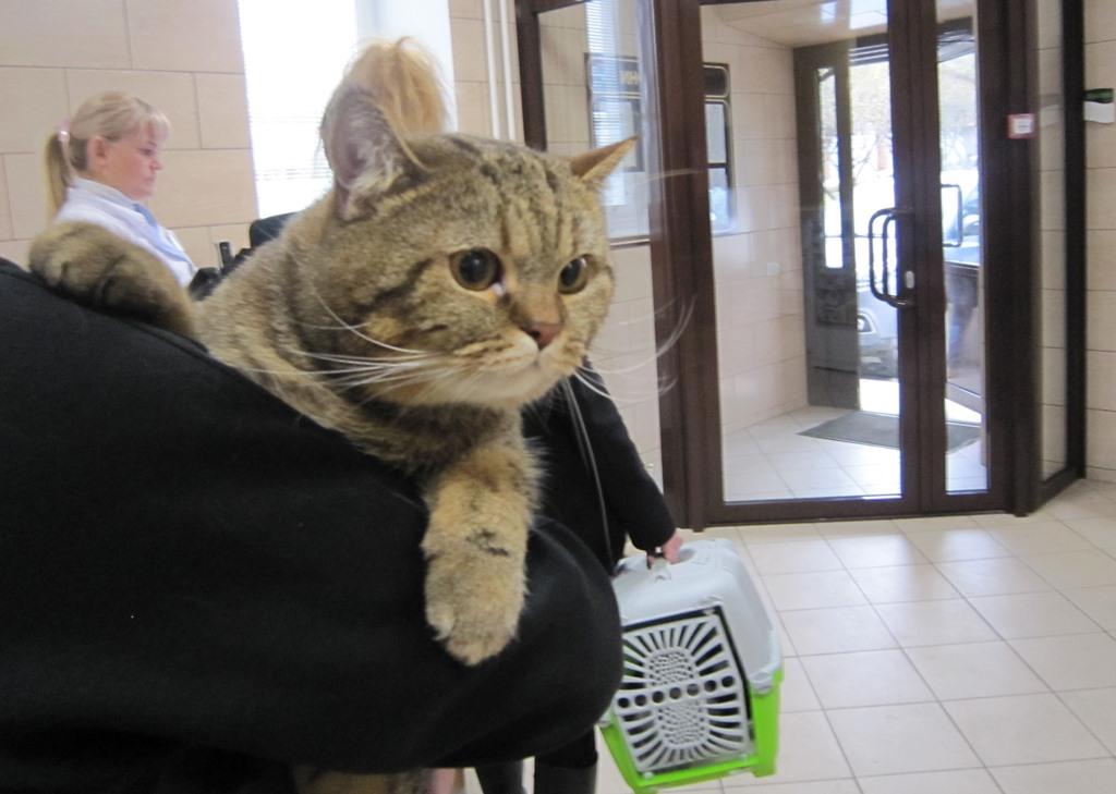 Как понять, что кот заболел: физиологические признаки, внешний вид