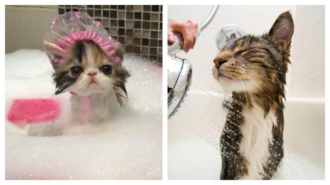 Мыть кошек мылом не рекомендуется