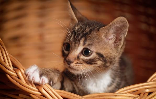 Мягкие когти совсем юных котят не нуждаются в коррекции