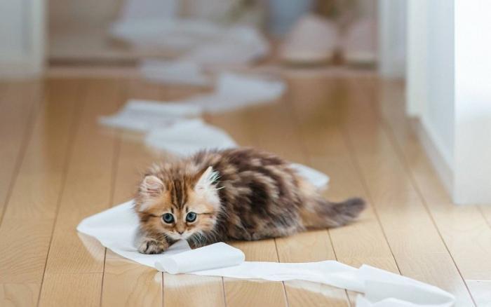 Наигравшиеся за день коты, ночью будут вести себя более смирно