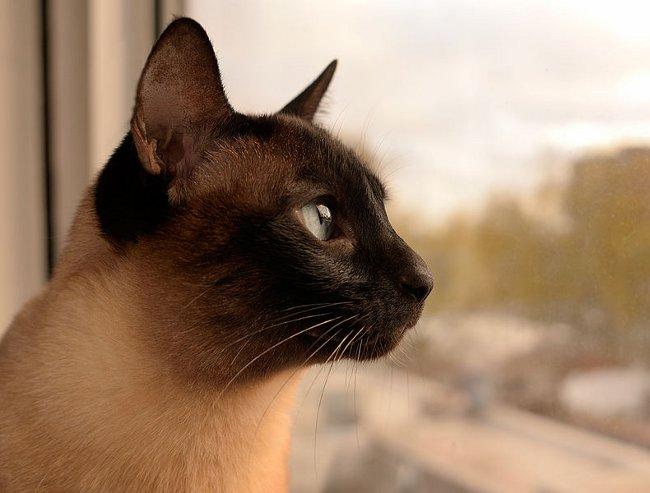 Наилучшее расположение спального места подскажет вам сама кошка и ее предпочтения