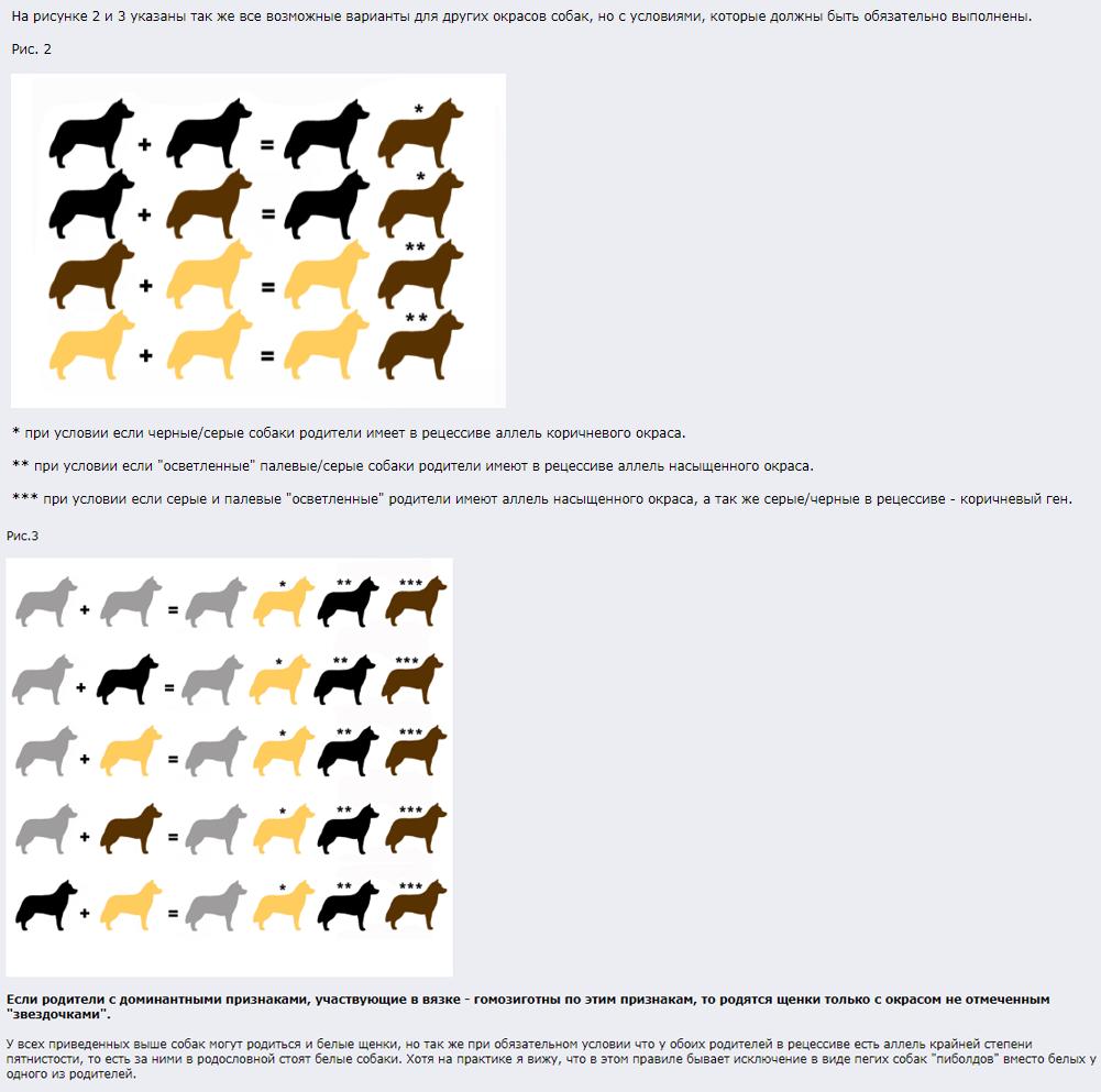 Собаки тигрового окраса породы