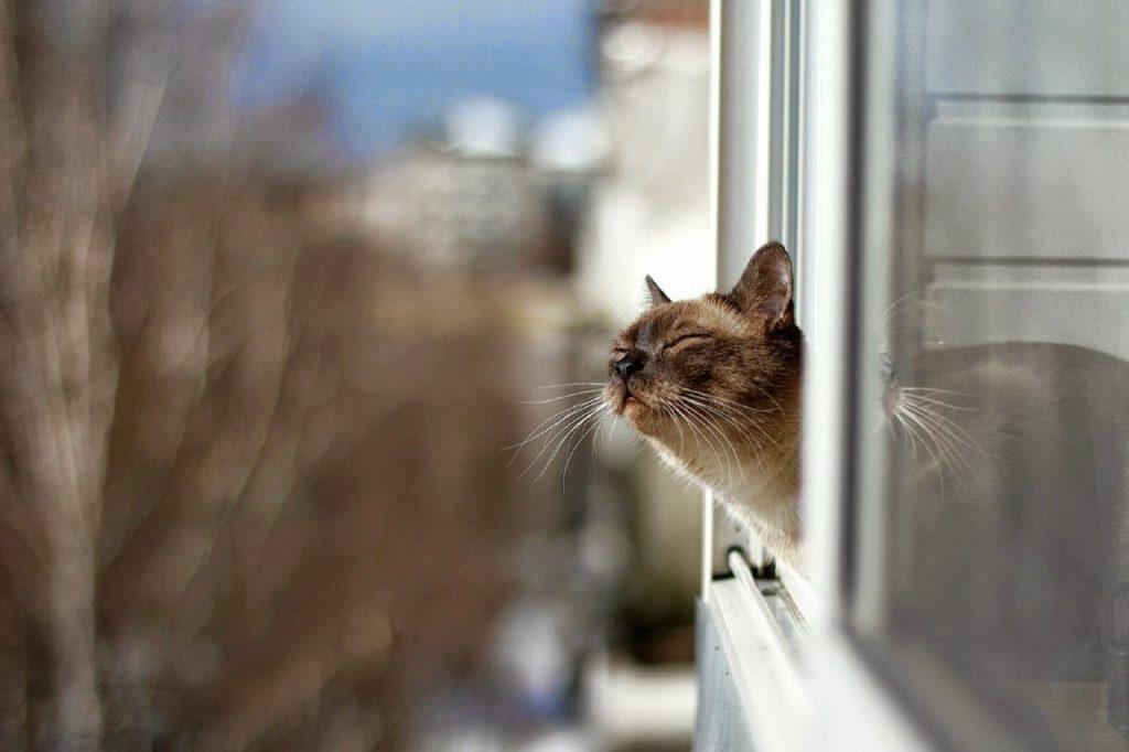 Настроение кота может радикально измениться при встрече с новым запахом