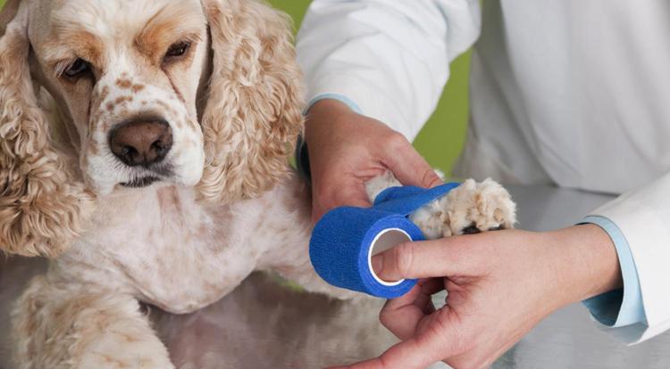 Начинать лечить животное можно только после постановки точного диагноза
