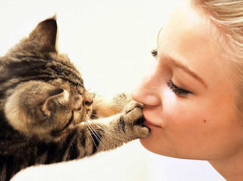 На кошачьей шерсти присутствуют микроорганизмы, не все из которых безобидны