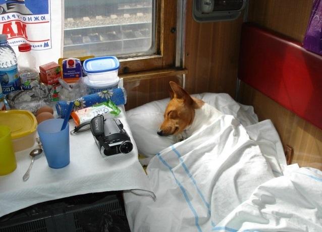 Некоторые животные лучше засыпают под одеялом