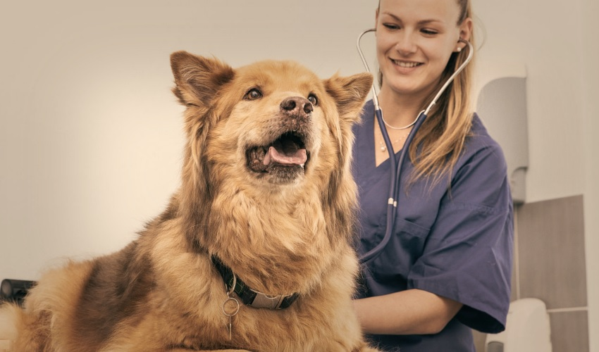 Необходимо периодически посещать ветеринара