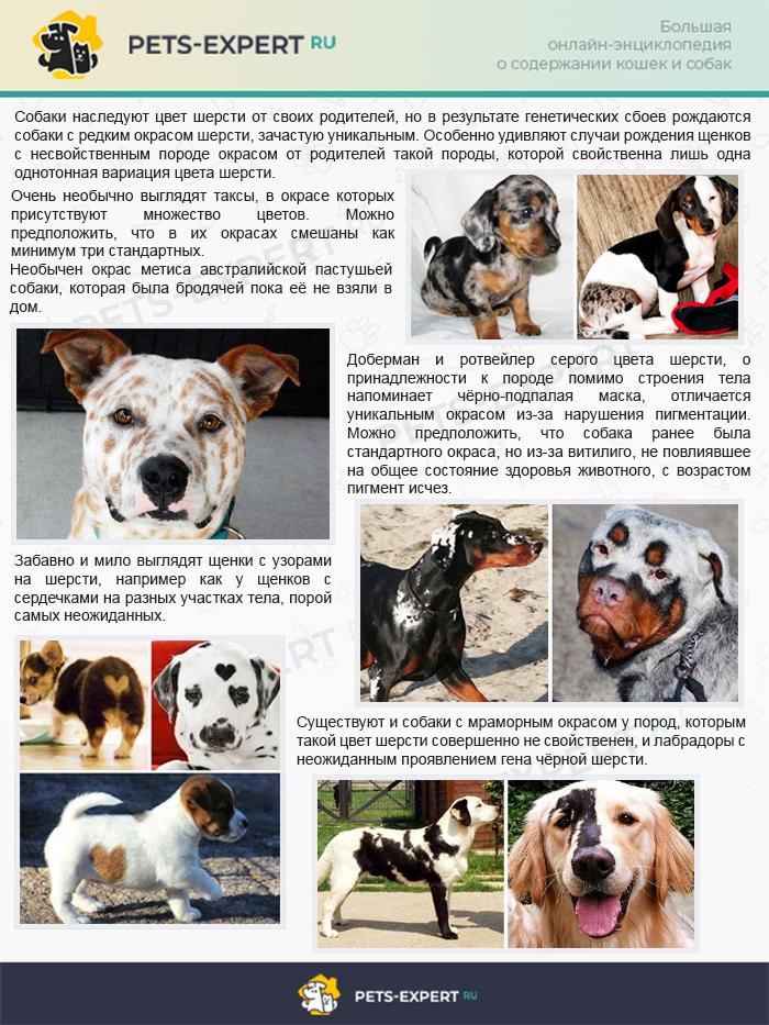 Необычные окрасы собак